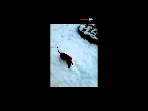 Seznámení se sněhem