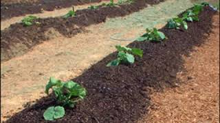 Organic Gardener's Composting by Steve SOLOMON read by Betsie Bush | Full Audio Book