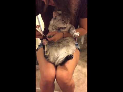 萌萌貓咪在剪指甲時「完全沒有亂動亂鬧」,牠出乎意料的反應讓貓奴都羨慕哭了!