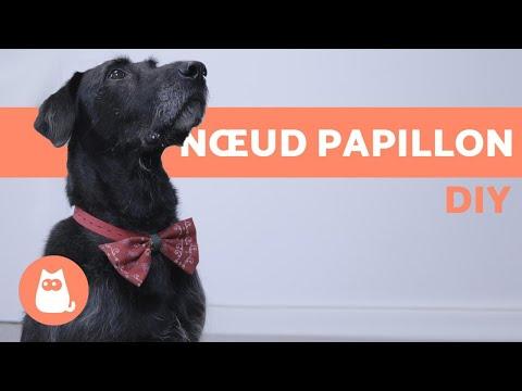 Set de noeuds trendy pour chiens