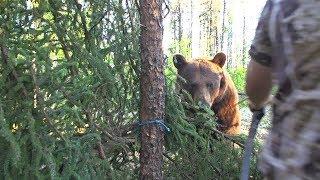 Video Big bear bumps into traditional archer's arrow MP3, 3GP, MP4, WEBM, AVI, FLV Oktober 2017