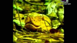 Tong Lok Kwang 1 April 2012 - Thai Documentary