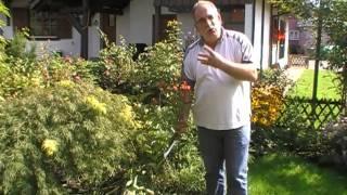 #236 Tipps und Tricks zu Weigelien (Bristol Ruby)