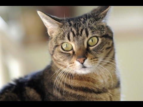 Gatos Chistosos - Animais engraçados - Videos Graciosos