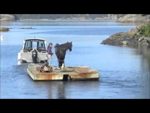 Lopez Island Horse Ferry