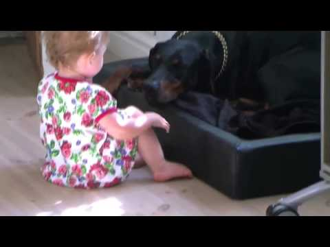 Download More Dangerous Doberman and a Cute Baby | Funny Videos 2015 HD Mp4 3GP Video and MP3