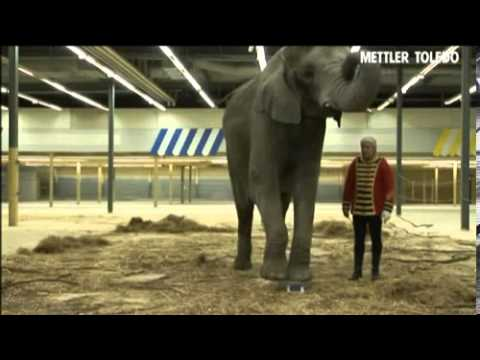 Precision Balance put to the test in elephant trial