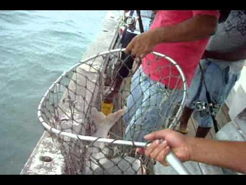 pesca de bagre em Pereque