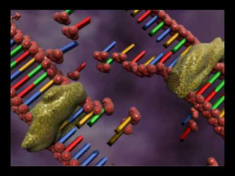 DNA replication animation by interact Medical