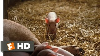 Nonton Charlotte S Web  1 10  Movie Clip   Fern Saves Wilbur  2006  Hd Film Subtitle Indonesia Streaming Movie Download