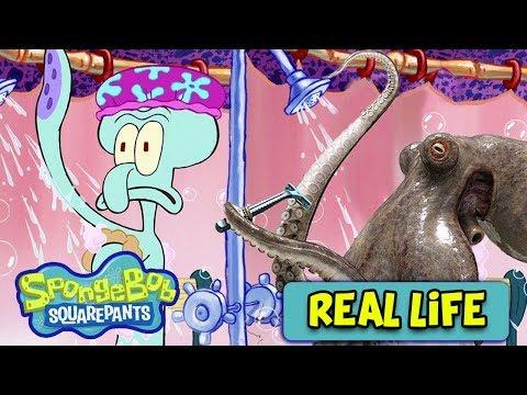 10 Spongebob Squarepants Characters In Real Life!