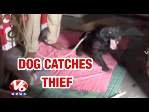 Police dog helps track down of thief in Rangareddy district  Teenmaar News 25042015