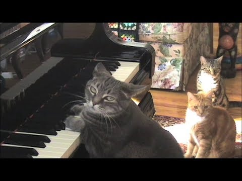 Cat Plays Piano With Orchestra