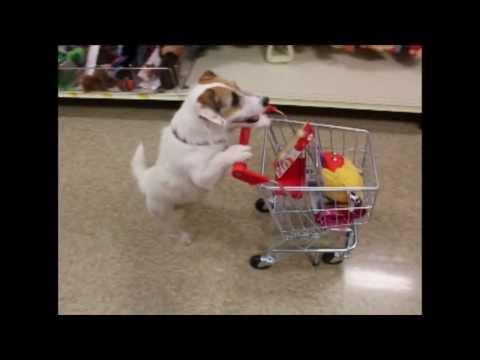 Just Jesse the Jack's Awesome Dog Tricks