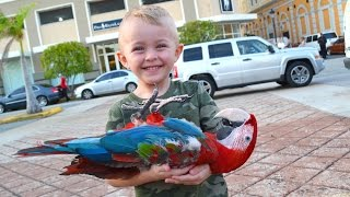 Video BOY FINDS DEAD BIRD!! MP3, 3GP, MP4, WEBM, AVI, FLV Oktober 2017