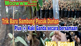 Video Trik terbaru sambung Pucuk Durian plus (+) Kaki ganda secara bersamaan berhasil 100℅ MP3, 3GP, MP4, WEBM, AVI, FLV Juli 2018