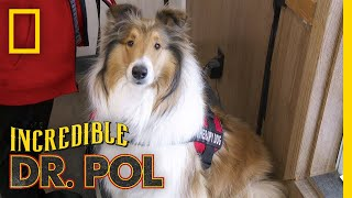 A Collie Throwing Up Blood | The Incredible Dr. Pol by Nat Geo WILD