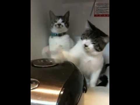 前面這兩隻貓咪跟電鍋的互動已經讓我露出微笑,但看到最後一秒我卻「啊」的一聲叫出來!