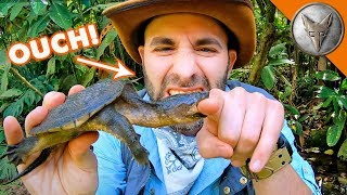 Snapping Turtle BITES Me.. AGAIN! by Brave Wilderness
