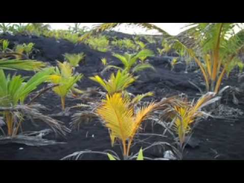 0 Death & Rebirth of a Black Sand Beach:  Kalapana & Kaimu