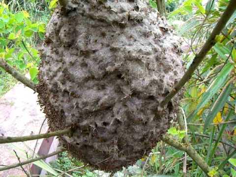 上萬隻的螞蟻突然跑出來!