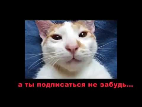 Funny cats 2018,Funny cat videos ,Funny animals,Funny video,cats funny,funny videos,funny cat