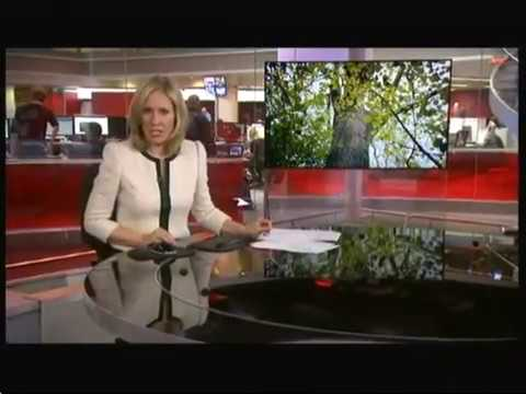 Ash tree extinction (UK & Europe) - BBC News - 23rd March 2016