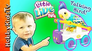 HobbyKids have fun trying to get this Little Live Pets bird to talk! He keeps rolling of the table. Subscribe for NEW Shows: http://www.youtube.com/subscription_center?add_user=HobbyKidsTV ---TOY VIDEOS---Family Video Gaming Fun: https://www.youtube.com/playlist?list=PLzDMAGLsSlZrhbIdcXn1B5qLtd_6D9407World's Biggest Surprise Eggs: https://www.youtube.com/playlist?list=PLzDMAGLsSlZoNvpGg-ijs4DlYu2RMSOxoGames and Challenges: https://www.youtube.com/playlist?list=PLzDMAGLsSlZqo_IVVsyn7Sn0yFehplgK1Best Family Fun Shows: https://www.youtube.com/playlist?list=PLzDMAGLsSlZpBsqsE4zkBbucAsQ0bgiWdLearning Playlist:http://www.youtube.com/playlist?list=PLzDMAGLsSlZo8aAHrPRzVmM_oW_hZtxdO---OUR OTHER HOBBY CHANNELS---HobbyFamilyTV (Vlog and Extras): http://www.youtube.com/user/hobbykidsvidsHobbyPigTV (Video Gaming):http://www.youtube.com/user/hobbygamestvHobbyFrogTV (Video Gaming):http://www.youtube.com/user/hobbytrixieHobbyBearTV (Toys, Video Games, more):http://www.youtube.com/user/hobbykidsland---FIND US---http://www.Twitter.com/HobbyKidsTVhttps://www.facebook.com/HobbyKidsTV/http://www.HobbyKidsTV.comhttps://www.instagram.com/hobbykidstv/---ABOUT HobbyKidsTV---HobbyKidsTV is the #1 place for kids to watch family-friendly clean shows! Video gaming and giant surprise egg adventures. We are world renowned for being the first and original inventor of all GIANT SURPRISE EGGS! It was our sons unique idea in 2013 to make a wonderful GIANT surprise egg for all our fans. We are the leader in kids creative ideas, skits and science fun. Subscribe to HobbyKidsTV, the trusted brand of families across the globe. We produce the best and most fun kids toy and gaming shows. Collector of the best toys to teach kids imaginative play through games or adventures. HobbyKids love sharing fun educational learning and popular play. Be a HobbyFan today and subscribe for free to see new edutainment shows!---MUSIC BY---Epidemic Sound