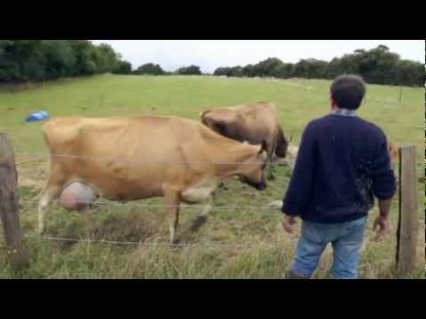 The mobile milking parlour. Future Farms food co-operative.