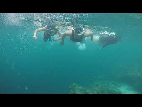 Sardines Adventure Moalboal Cebu