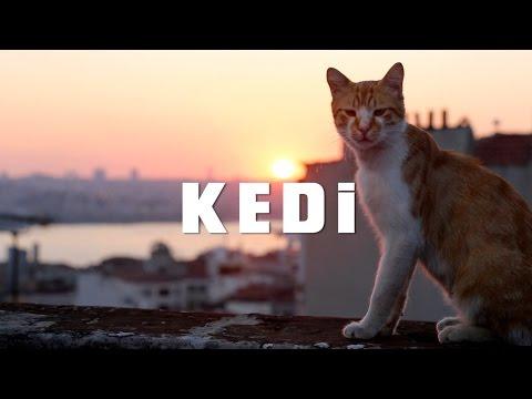 Still of Kedi