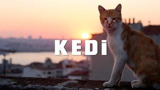 Nonton KEDI - TRAILER 1 Film Subtitle Indonesia Streaming Movie Download