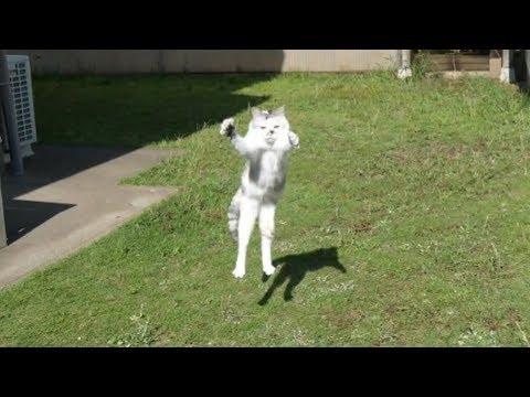 疾風の如く駆け回る三毛猫姉さん。夏のお庭は虫がいっぱいにゃ! видео