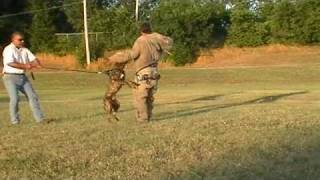 Working Dogs of Tejas