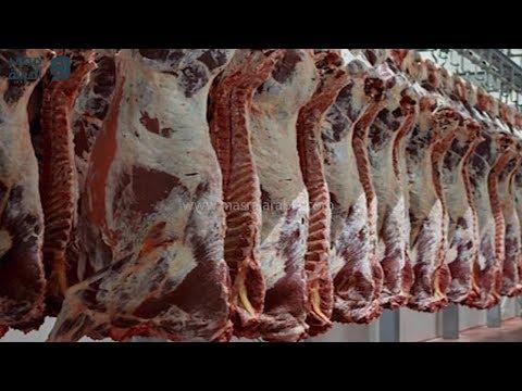 آخر أخبار أسعار السلع.. استقرار الفراخ والبيض والسمك وارتفاع اللحوم