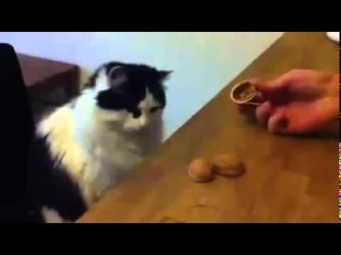 il gatto più intelligente del mondo!