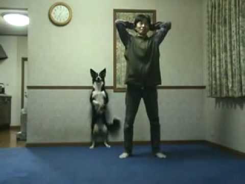 il cane che fa ginnastica col padrone