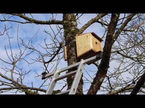 Comment faire venir des oiseaux dans son jardin ?