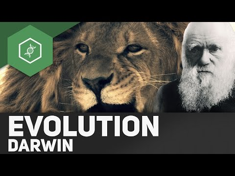 call of the wild vs darwin essay