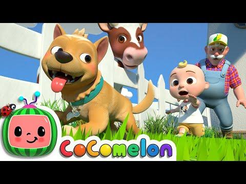 Bingo (Farm Version)   CoComelon Nursery Rhymes & Kids Songs