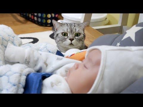 5隻小貓咪第一次發現「家中的新成員」時,驚慌失措又好奇心破表的反應讓我無法停止的重播啊!