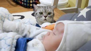 Cinq chats accueillent le nouveau né dans une famille.