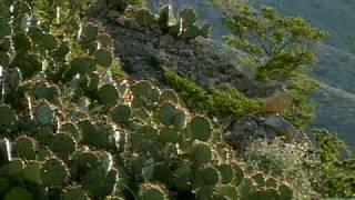 Franklin (TX) United States  city images : Franklin Mountains State Park - Texas Parks & Wildlife [Official]