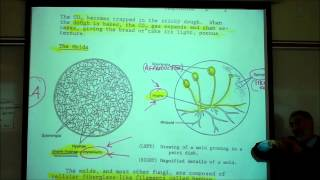 KINGDOM FUNGI By Professor Fink.wmv