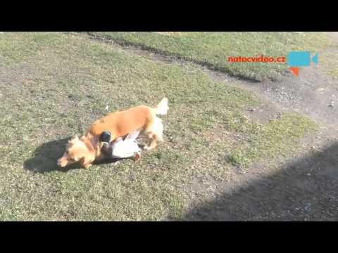 Pejsek a kačer - velcí kamarádi