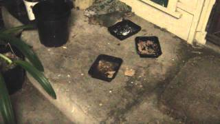 Snails & slugs eating cat's food at night, sped up 150x.