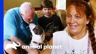 Family Makes A Tough Decision About Adopting A Dog | Pit Bulls & Parolees by Animal Planet