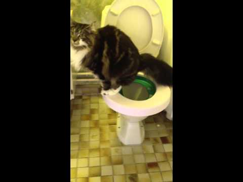 Cat with diarrhea on a water closet