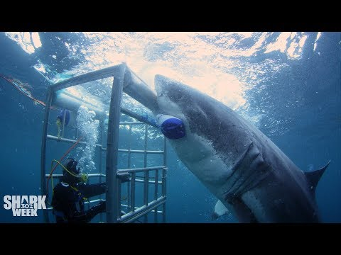 The Boldest Bites | Shark Week& 39;s Most Intense Encounters