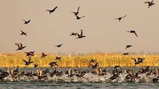 Nalsarovar Bird Sanctuary , ahmedabad , best place of Ahmedabad , gujarat,india full download video download mp3 download music download